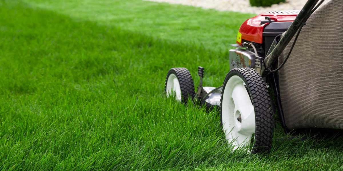 5 Mistakes to Avoid when Starting a Landscaping Business - 5 Mistakes To Avoid When Starting A Landscaping Business – Northern